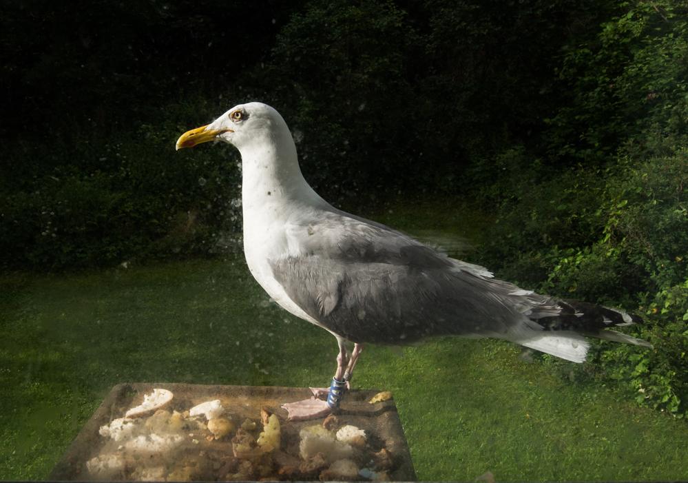 Vinduet blir fort tilgriset fra utsiden når Markus tapper forsiktig på for å få en matbit.